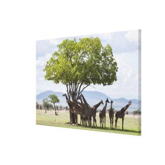 On safari in Mikumi National Park in Tanzania, Stretched Canvas Print