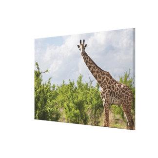 On safari in Tanzania, Africa. 2 Canvas Print
