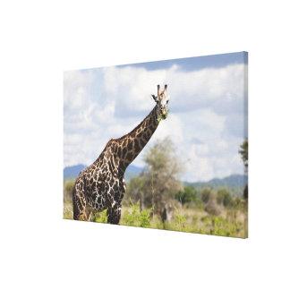 On safari in Tanzania, Africa. Canvas Print