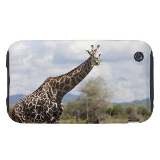 On safari in Tanzania, Africa iPhone 3 Tough Covers