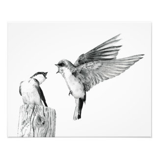On Swallow's Wings Photo Print