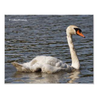 On Swan Lake Photo Print