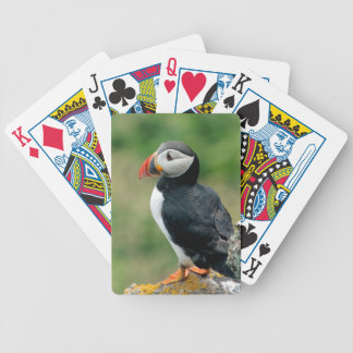 On the Edge Puffin Playing Cards