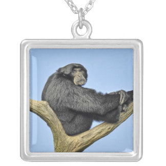 On Top of the World Gibbon Square Pendant Necklace