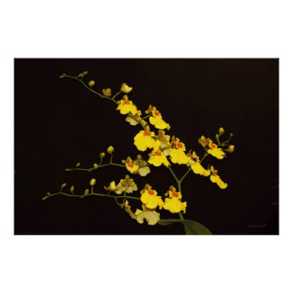 Onc Yellow Orchid Art Poster -60x40 -or smaller