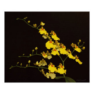 Onc Yellow Orchid Art Print -24x20 -or smaller
