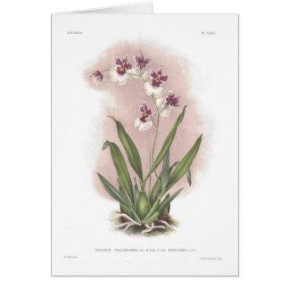 Oncidium phalaenopsis var excellens card