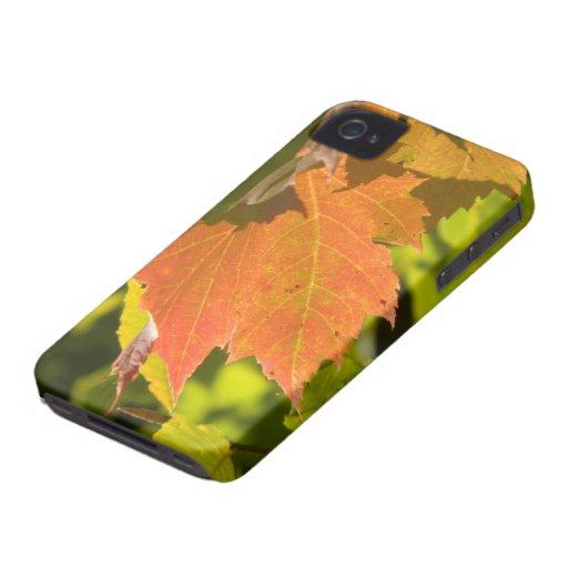 One Autumn Leaf iPhone 4 Case-Mate Case