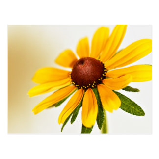One Black-Eyed Susan Blossom Postcard