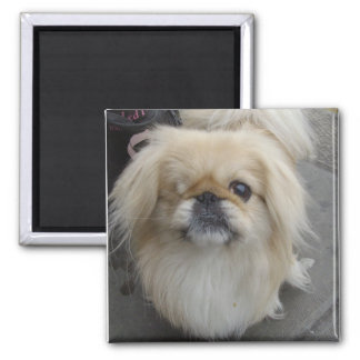 one eyed dog magnet