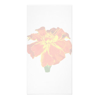 One French Marigold Photo Card Template