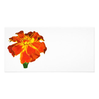 One French Marigold Customized Photo Card