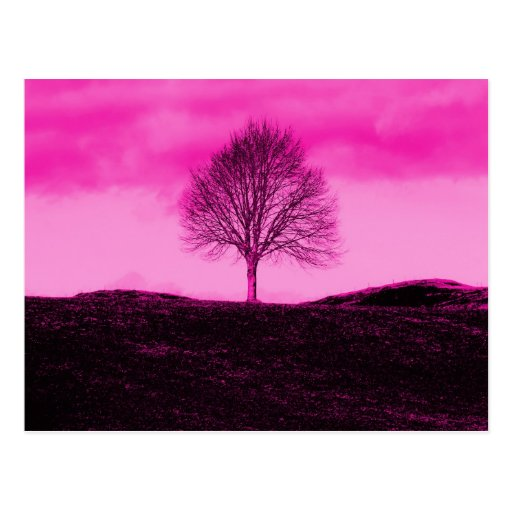 One Lone Tree Silhouette Hot Pink Landscape Post Cards