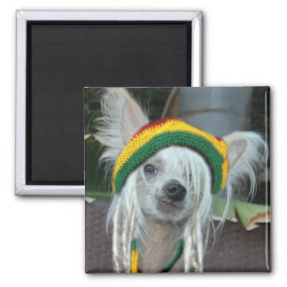 One Love Chinese Crested Rasta Dog Magnet