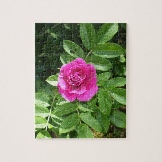 One Lovely Rose Bloom Jigsaw Puzzle