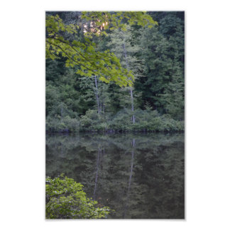 One Midsummer's Evening in the Woods. Photo Print.