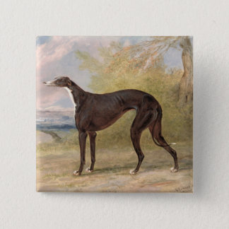 One of George Lane Fox's Winning Greyhounds: the B 15 Cm Square Badge
