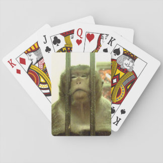 One of those days playing cards