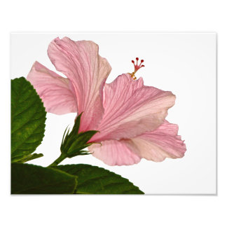 One Pink Hibiscus Photographic Print