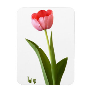 One Pink Spring Tulip Nature Floral Photo Rectangular Photo Magnet