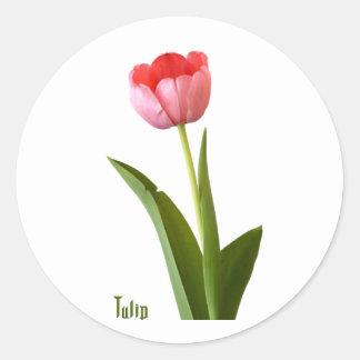 One Pink Spring Tulip Nature Floral Photo Round Sticker