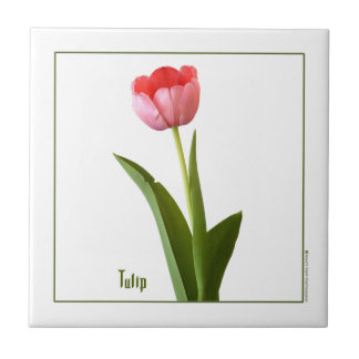 One Pink Spring Tulip Nature Floral Photo Small Square Tile