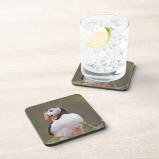 One Puffin Coaster