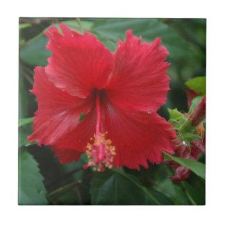 One red hibiscus ceramic tile