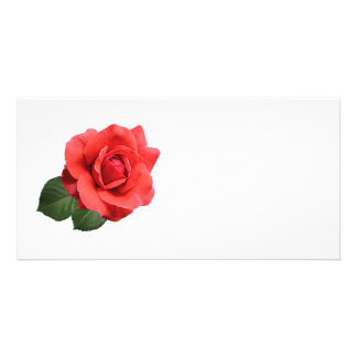 One Red Rose Photo Card