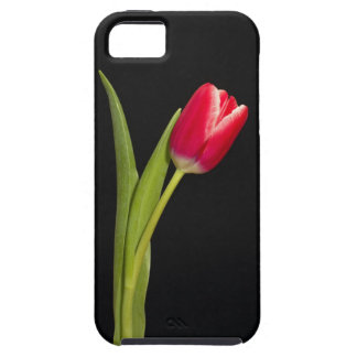 One red tulip on a black background iPhone 5 case