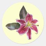 One Stargazer Lily Classic Round Sticker