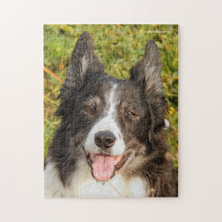 One Very Friendly Border Collie Puzzle