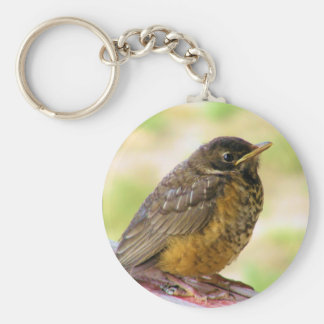 One Week Old Robin On a Perch Key Ring