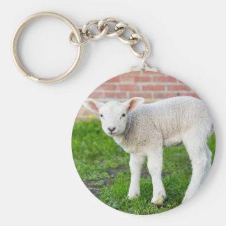 One white newborn lamb standing in green grass basic round button key ring