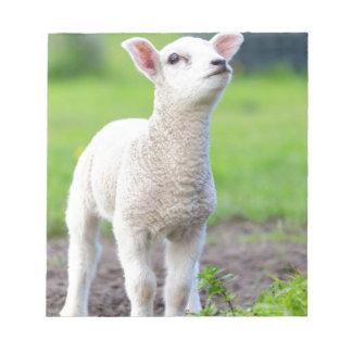 One white newborn lamb standing in green grass notepad