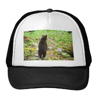 One year old Brown Bear in Slovenia Cap