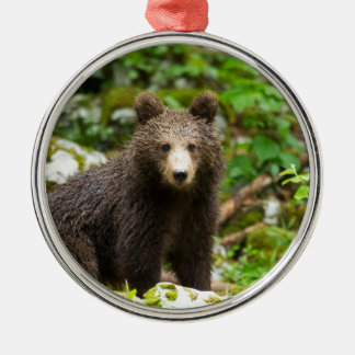 One year old Brown Bear in Slovenia Silver-Colored Round Decoration