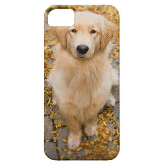 One year old Golden Retriever, portrait Case For The iPhone 5