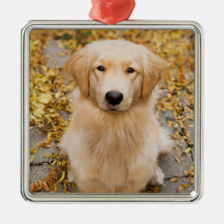 One year old Golden Retriever, portrait Christmas Ornament