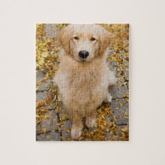One year old Golden Retriever, portrait Jigsaw Puzzle