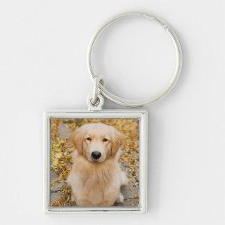 One year old Golden Retriever, portrait Key Ring