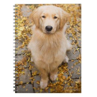 One year old Golden Retriever, portrait Notebook