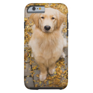 One year old Golden Retriever, portrait Tough iPhone 6 Case