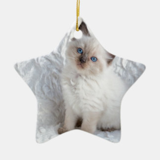 One young ragdoll cat sitting on fur in chair ceramic star decoration