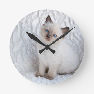 One young ragdoll cat sitting on fur in chair round clock