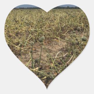Onion Field Landscape in Georgia Heart Sticker