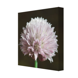 Onion flower canvas print