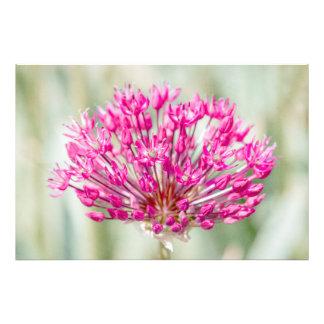 Onion Flower Photograph