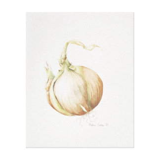 Onion Study 1993 Canvas Print