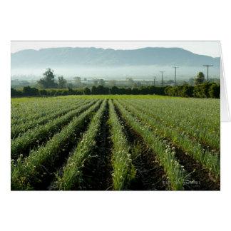 Onions growing in field card